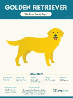 Goldens Rule! Here Are All the Reasons Why.