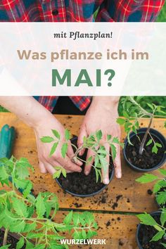Aussaat & Pflanzen im Mai - mit Pflanzplan! Diy Projects For Beginners, Gardening For Beginners, Real Plants, Growing Plants, Planting Vegetables, Growing Vegetables, Vegetable Gardening, Small Gardens, Outdoor Gardens