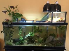 Pin by Jeanette Thomas on lizards Aquarium de tortue Aquatic Turtle Habitat, Aquatic Turtle Tank, Turtle Aquarium, Aquatic Turtles, Aquarium Ideas, Box Turtle Habitat, Aquarium Setup, Home Aquarium, Turtle Cage