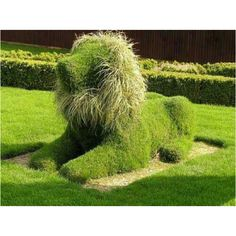 Green protector in garden..