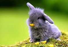 bunnies nature animals baby animals