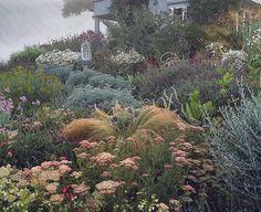 Nassella, achillea, artemesia, society garlic, artichokes, tantacetum niveum, verbascum, stipa gigantea, lavender, several salvias (California Mix Vegetables)