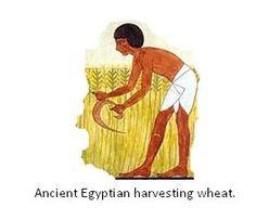 Egypt: Ancient Egypt Farming | Agriculture | Pinterest | Egypt and ...