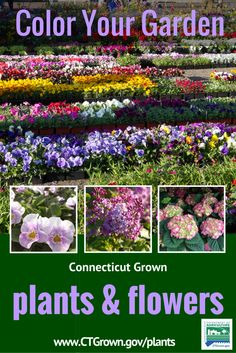 Find Your Local Connecticut Greenhouse Or Nursery