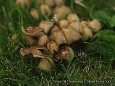 Mark Fisher New York City Photographer: A Group Of Mushrooms • New York Photographer Mark ...
