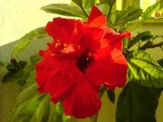 Pesto, Gardening Tips, Plants, Plant, Planets