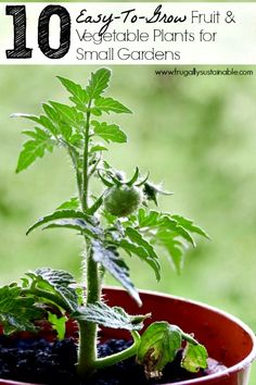 10 Easy To Grow Fruit & Vegetable Plants for Small Gardens http://herbsandoilshub.com/10-easy-to-grow-fruit-vegetable-plants-for-small-gardens/