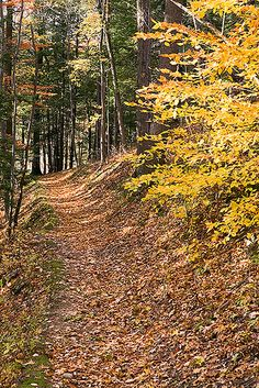 Forest Trail, Durand Eastman Park, Rochester, NY, via Flickr.