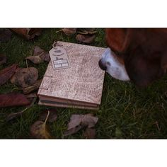 #beagle #wood #woodjournal #autumn #photoalbum #photooftheday #zszywalnik #notes #notatnik #rękodzieło #ręcznierobione #polskidizajn #polscyprojektanci #artykułybiurowe #biuro #szycie #domowebiuro #eko #handmade #notebook #bookbinding #eco #ecofriendly #scrapbooking #notebooksdesign #stationary #journals #sketchbook #handcraft