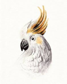 Cacatua galerita watercolor painting #watercolour #watercolor #ink #illustration #drawing #art #watercolorart #painting #suluboya #suluboyaresim #watercolorpainting #illustrationart #cacatua #papağan #parrot #bird #birds #aquarelle #kakadugiller #cacatuagalerita #cackatoo #cackatoos #tropical #picture #pictureart