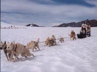 Dogsledding on Mendenhall Glacier via Helicopter - what our musher Jim does in the summer