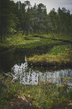 Wilderness Stream In Inari, Finland [OC] Outdoor Photography, Landscape Photographers, Great Photos, Finland, Wilderness, Natural Beauty, Oc, Scenery, Country Roads