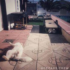 Aww #travellingcat sunbathing in #spain