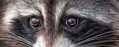 Wild Eyes - Raccoon by Carol Cavalaris. This artwork of a young raccoon with big curious eyes is from the Wild Eyes Collection of wildlife art by Carol Cavalaris.