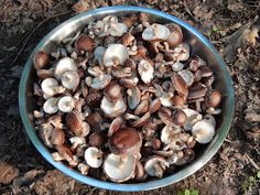 Wellspring Forest Farm & School Blog: Take care of your shiitake!