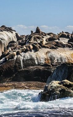 Seal Island in Cape Town - South Africa. Places To Travel, Places To See, Le Cap, Cape Town South Africa, Thinking Day, Belleza Natural, Africa Travel, Adventure Is Out There, Island Life