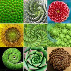 Art Design Nature Fibonacci Spiral Ideas For 2019 Fractals In Nature, Spirals In Nature, Fibonacci Sequence In Nature, Fibonacci Spiral In Nature, Golden Ratio In Design, Golden Ratio In Nature, Maths In Nature, Fibonacci Golden Ratio, Fibonacci Code