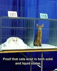 Proof that cats come in both solid and liquid forms!!