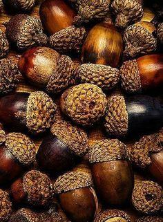 macro photography acorns autumn fall home decor kitchen decor Autumn Day, Autumn Leaves, Autumn Song, Soft Autumn, Autumn Harvest, Fotografia Macro, Autumn Inspiration, Fall Season, Earth Tones
