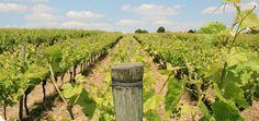 Création du site Internet du Cep Enchanté, premier Parc à thème viticole d'Europe.