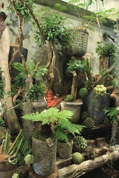 Japan, dreamy interior greenscape House Plants Decor, Plant Decor, Indoor Garden, Indoor Plants, Potted Plants, Garden Shop, Garden Pots, Garden Center Displays, Greenhouse Interiors