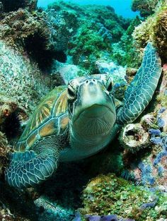 the sea turtle layinjg on shells sea turtles over produce because  a lot dont survive