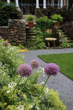 Allium 'Pinball Wizard' in the North Garden, mid June Plants, Outdoor Decor, North Garden, Stepping Stones, Garden, Backyard, Dream Backyard