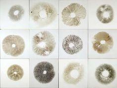 best interior design ideas: chris drury: natural art: Boletus Circle & Spore Grid
