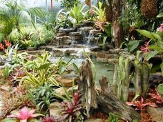 Tropical ambiance Organic Gardening, Planting, Pools, Flowers, Tropical, Image, Studio, Plants, Studios