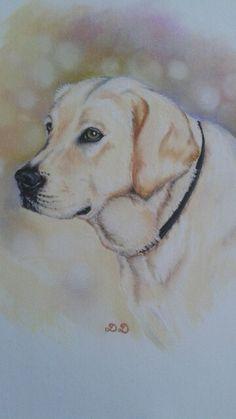 Ruby, chien Labrador Pastels secs