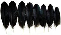 8 Genuine Icelandic BEAUTIFUL raven wing feathers(Common raven) #Commonraven