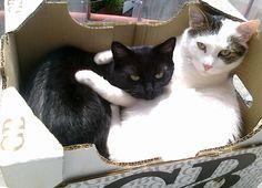 ...moje koty...cats...