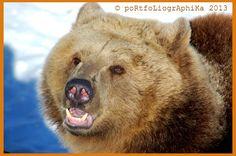 Karhut ovat todella heränneet!