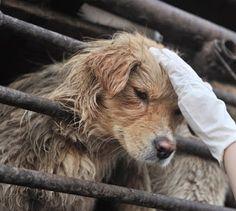 Interdire l'importation du cuir provenant de Chine