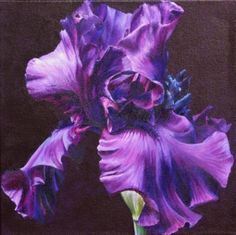 Sarah Caswell 'Imperious Purple' - Acrylic on canvas x Oil Painting Flowers, Artist Painting, Painting & Drawing, Flower Paintings, Iris Flowers, Large Flowers, Small Paintings, Contemporary Paintings, Iris Art