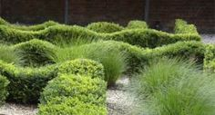 Love the grasses with the wavy box hedges