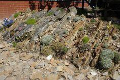 Forum Ogrodnicze Oaza :: Topic: Szczelinowe ogrody skalne (Crevice gardens) (3/5)