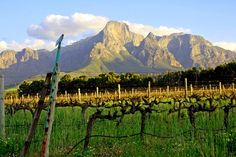 Stellenbosch, South Africa - Can't wait to return, Loved the college community and great small town feel. South Afrika, Travel Memories, Country Of Origin, Wine Country, Small Towns, Wonders Of The World, Trip Planning, Places Ive Been, Vineyard