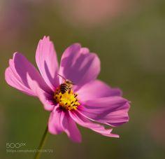 Sting by michael_photographe #nature #photooftheday #amazing #picoftheday