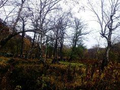 Нечто мёртвое в лесу