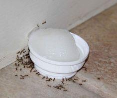 Voici un mélange naturel qui va vous débarrasser des fourmis dans et autour de votre maison - Trucs et Astuces - Maisons Etc.
