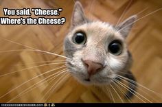 Cheese http://chzb.gr/KMIYN5