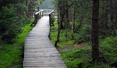Jeseníky - Rejvíz Okolí Velkého mechového jezírka. Cesty tu vedou po dřevěných lávkách...