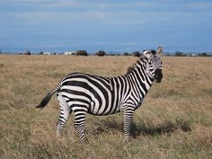 such beautiful animals