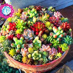 100 stücke spitzer sukkulenten samen perlen bonsai absorbieren formaldehyd topfpflanzen innenluft reinigung pflanzen samen
