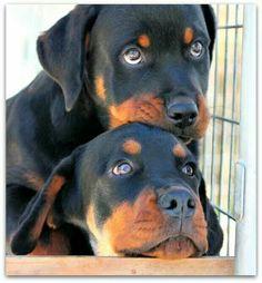 .beautiful babies