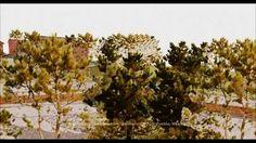 ipalma arquitectos diseño paisajista Salón jardin Twitter, Plants, Landscape Architecture, Architects, Gardens, Scenery, Blue Prints, Plant, Planets