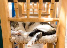 One cat in Folegandros