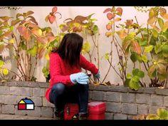 Para que las hortensias crezcan sanas y fuertes hay que podarlas por lo menos una vez al año, y para no afectar su floración se recomienda podar a finales de...