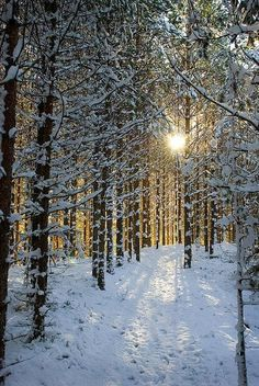 Snow Forest, Sweden. Looks like MN.....on a nice day.